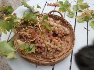 Les grappes sont prêtes à être mise en hibernation...